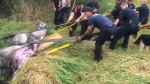 Saanich firefighters rescue horse
