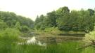 Strasburg Woods in Kitchener, Ontario.
