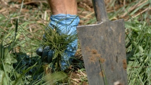 Forests Ontario, a not for profit organization, has planted a record number of trees in the Timiskaming region this year. Aug. 1/21 (Eric Taschner/CTV News Northern Ontario)