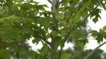 Timiskaming tree planting hits record high
