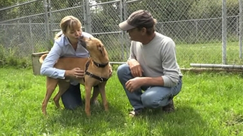 Pet shelter reaches full capacity in Sudbury