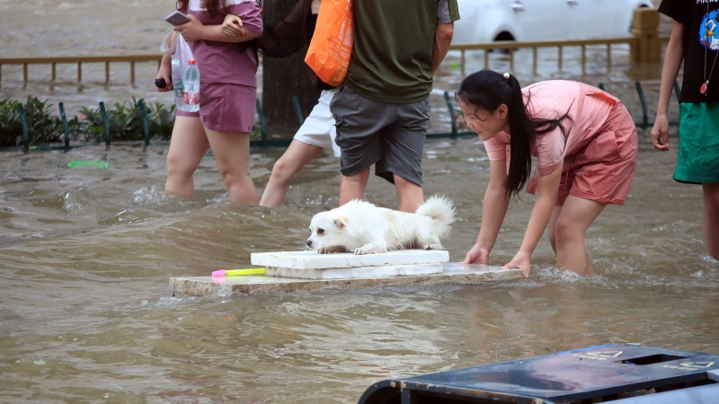 A girl helps her pet dog through flood waters after record downpours receded in Zhengzhou city in central China's Henan province Wednesday, July 21, 2021. (Chinatopix via AP)