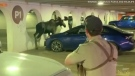 Moose caught wandering in parking garage