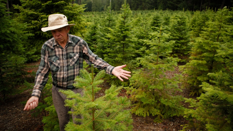 Sahtlam Tree Farm owner Robert Russell is photographed on his property, in the Cowichan Valley area of Duncan, B.C., on Saturday, July 31, 2021. THE CANADIAN PRESS/Chad Hipolito