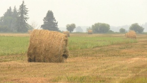 Driest July in 150 years last straw for farmers