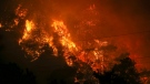 Trees burn in an advancing fire that rages Cokertme village, near Bodrum, Turkey, Monday, Aug. 2, 2021. (AP Photo/Emre Tazegul)