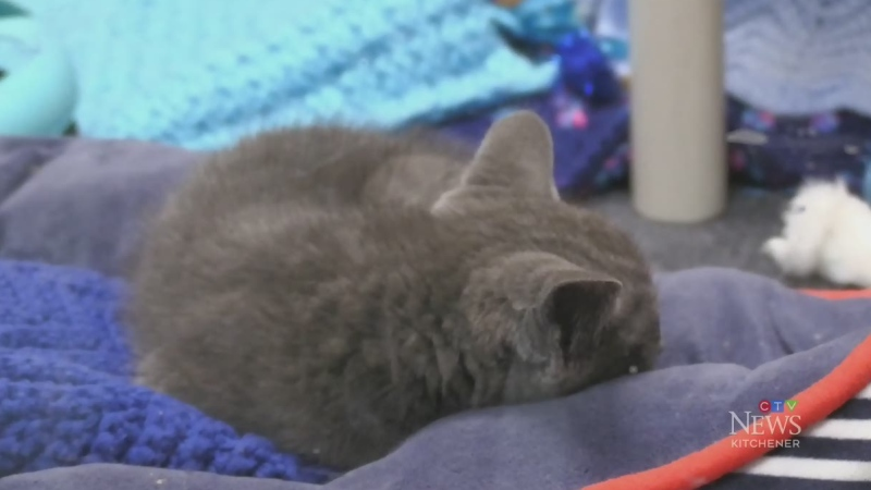Humane Society open for in-person visits