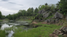 The Nature Conservancy of Canada says an 83-hectare property about 40 km north of Kingston, Ont., known as the Frontenac Arch Natural Area, is now considered protected land. (Photo courtesy of Nature Conservancy of Canada)