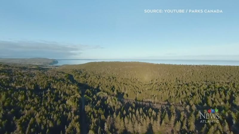 Parks Canada to plant 150,000 trees