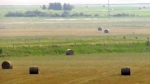 Wheatland County declares agriculture disaster