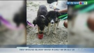 Animal welfare group caring for displaced pets