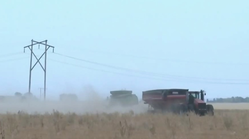 Producers begin harvesting dry crops