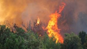 A wildfire rages the forest in Koycegiz, Mugla, Turkey, Monday, Aug. 9, 2021. (AP Photo/Emre Tazegul)