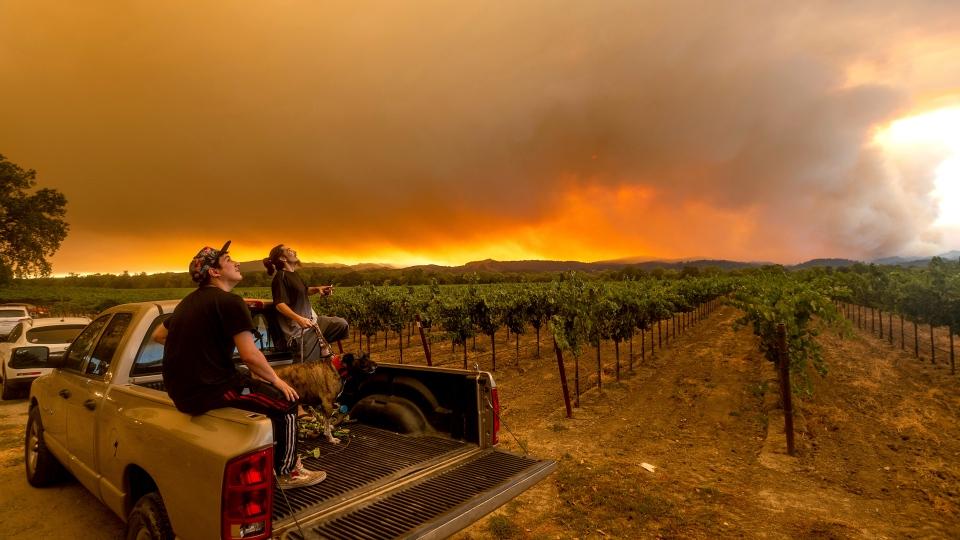 Smoke and ire near vineyard