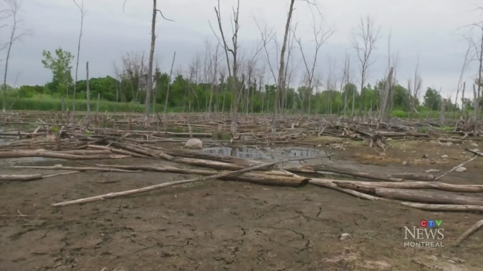 REM to blame for drained St-Laurent wetlands?