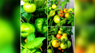 Picture This: Garden Harvest