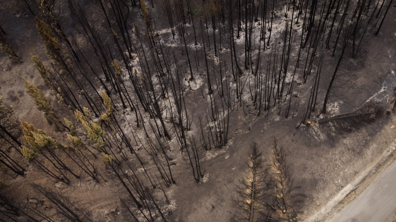 Trees burnt by the White Rock Lake wildfire earlier this month are seen, in Monte Lake, B.C., on Thursday, August 26, 2021. THE CANADIAN PRESS/Darryl Dyck