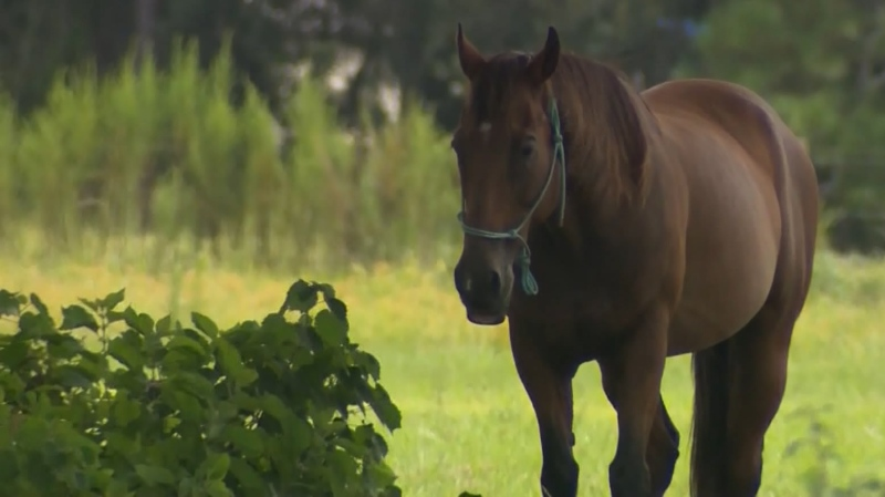 B.C. doctors and livestock businesses alike are bewildered to find themselves warning people not to take a veterinary medicine intended to treat intestinal worms in horses as a treatment for COVID-19. (CTV)