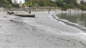 Victoria's Gonzales Beach as seen on Sept. 14, 2021: (CTV News)