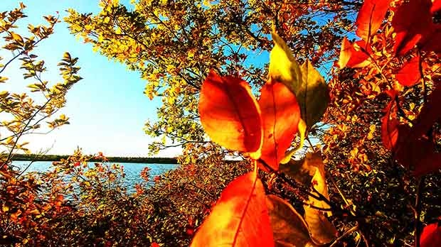 Signs of fall in Whiteshell Park. Photo by Martha Heinrichs.