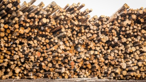 Logs wait to be processed into lumber at the Spray Lake Sawmills in Cochrane, Alta., Thursday, May 20, 2021. (THE CANADIAN PRESS / Jeff McIntosh)
