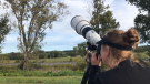 Bird Photographer Liz Norton is seen with her camera pointed skyward in Aylmer, Ont. A Swallow-tailed kite bird is near the top of the tree on right, Sept 15, 2021. (Sean Irvine / CTV London)