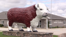 Big Bruce, voted Ontario's Greatest Roadside Attraction, sits outside Aaron-Elderslie municipal offices in Chesley, Ont., Sept 15, 2021. (Scott Miller / CTV News)