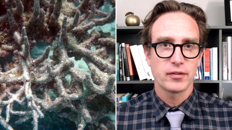 Dan Riskin on a glimmer of hope for coral reefs