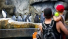 Visitors to the Calgary Zoo look at penguins in the Penguin Plunge exhibit. (The Canadian Press)