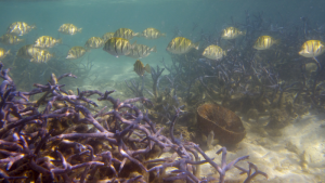 Fish and coral in a photograph captured by study co-author Tyler Eddy. (Courtesy Tyler Eddy)