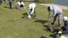 Group helps to improve city's tree canopy