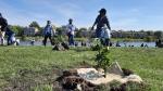 Residents plant trees and shrubs in Winnipeg's Albina Park on Saturday, September 19. (Source: CTV News/Daniel Timmerman)