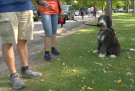Dogs and their owners walked through Kildonan Park on Sunday, September 19 in support of the Never Alone Cancer Foundation. (Source: CTV News/Daniel Timmerman)
