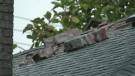 Firefighters were called to the 8500 block of Portland Street near Byrne Creek Ravine Park around 7 p.m. after lightning struck the chimney of a home in the area. (CTV)