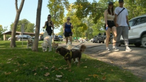 Dog walk in support of cancer foundation
