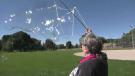 Lynn Hancock makes bubbles in a Guelph park. (Set. 19, 2021)