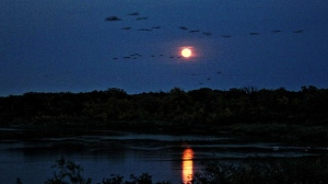 Rising moon on Sunday evening over the Assiniboine River in Beaudry Park. Photo by Allan Robertson.