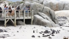 The penguin colony is pictured here in Simonstown, South Africa. Some 63 penguins were found dead on Friday, the South African National Parks said. (Lyu Tianran/Xinhua/Getty Images/CNN)