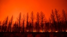 The night sky glowing after trees burned along Highway 395 during the Dixie Fire in the early morning of Aug. 17 near Janesville, California. (Patrick T. Fallon/AFP/Getty Images)