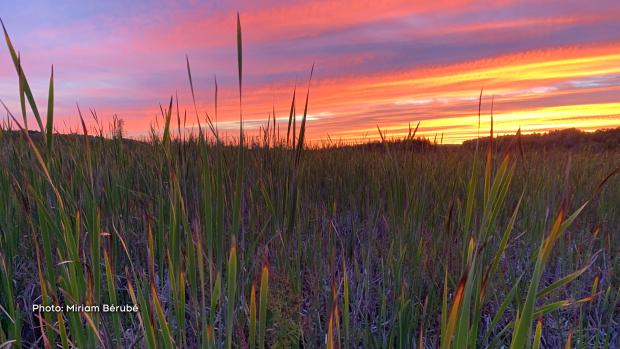 Sunset during a hike at Mer Bleue Bog. (Miriam Bérubé/CTV Viewer)