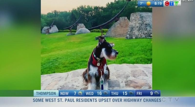 Take your dog on a tour of Downtown Winnipeg