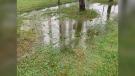 Flooding in Windsor, Ont. on Wednesday, Sept. 22, 2021. (Bob Bellacicco/CTV Windsor)