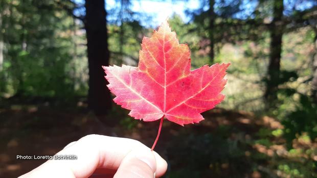 Happy Autumn from the Crazy Horse Trail. (Loretta Botvinkin/CTV Viewer)