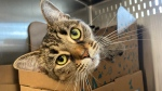 Pet of the Week: Terry