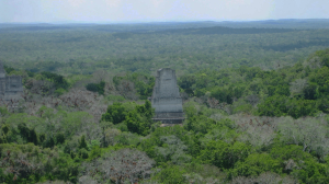 The Tikal site, taken from one of the temples there (Courtesy S. Houston/Antiquity)