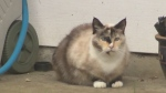 Nanaimo bans cats from roaming neighbourhoods