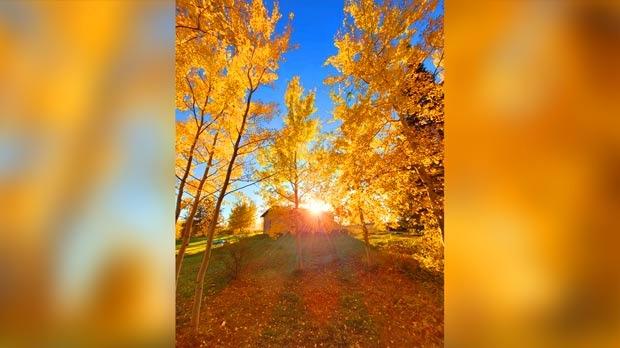 Fall Colours in the sun. Photo by Brendan Bradburn.