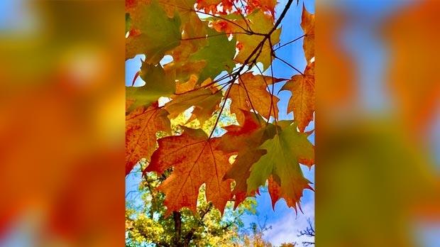 Beautiful Fall day in Souris. Photo by Randi Salamanowicz.