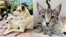 Some of the animals being cared for by the Alberta Animal Rescue Crew Society. (AARCS)