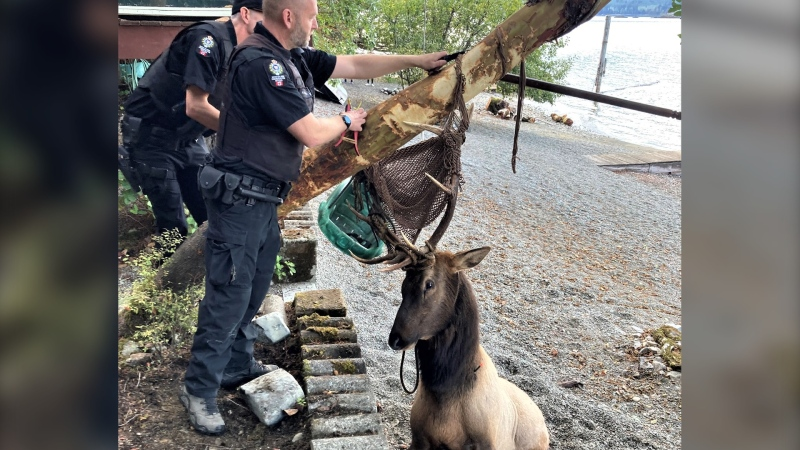 (BC Conservation Officer Service / Twitter)